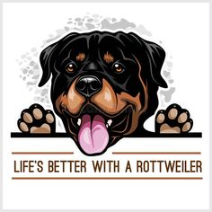 Search And Rescue Dogs, San Bernardo, Rottweiler Dog, Clipart, Cute Art, Dog Breeds, Cute Animals, Houston Apartment, Drawings