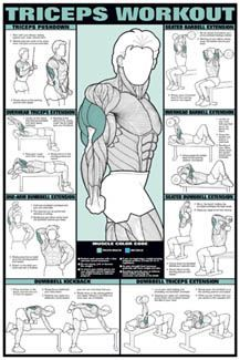 Workout Fitness Chart (Co-Ed) Buy your Triceps Workout Fitness Chart (Co-Ed) at !Buy your Triceps Workout Fitness Chart (Co-Ed) at ! Fitness Gym, Body Fitness, Fitness Tips, Fitness Motivation, Health Fitness, Fitness Shirts, Health Exercise, Health Club, Exercise Chart