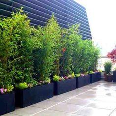 Bambus Im Garten bambus im kübel kann eine terrasse im garten oder einen balkon mit