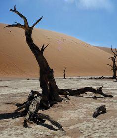 Un posto tanto assurdo quanto affascinate   Il #Deadvlei è una depressione caratterizzata da un suolo di #sabbia bianca prevalente composto da argilla. In passato questo luogo era un'#oasi di acacie che morirono quando il fiume  che alimentava l'oasi stessa mutò il proprio corso in seguito al movimento delle dune del #deserto.  Oggi il Deadvlei si presenta come una collezione di scheletri di alberi di acacia  morti dal colore molto scuro in netto contrasto col bianco del suolo e con…