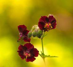 Colorful World - Tine fotografie