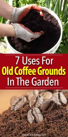 Garden Ideas Discover 7 Uses For Old Coffee Grounds In The Garden Adding coffee grounds in the garden has many benefits for compost fighting slugs staining benches compost tea growing mushrooms and more [LEARN MORE] Garden Compost, Garden Soil, Lawn And Garden, Garden Landscaping, Herb Gardening, Flower Gardening, Landscaping Ideas, Gardening Hacks, Slugs In Garden