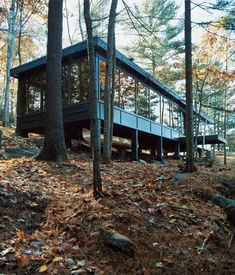 Minimalist cabin in woodland