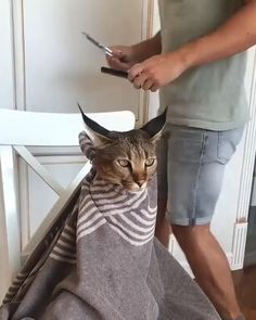 Excellent Beautiful cats detail are offered on our web pages. Have a look and you wont be sorry you did. Cute Cat Gif, Cute Funny Animals, Cute Baby Animals, Funny Cats, Funny Animal Videos, Funny Animal Pictures, Funny Videos Of Cats, Animal Memes, Funny Photos