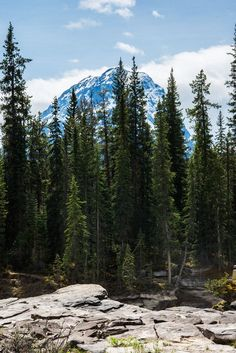 Forest and Rocky Mountains in Banff Alberta Canada