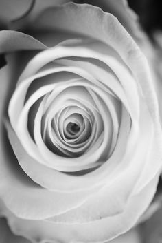 by the_vivid_girl, via Flickr Pretty Pictures, Black And White, Flowers, Art, Cute Pics, Art Background, Black N White, Black White, Kunst