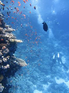 All interesting water activity scuba diving, snorkelling, fishing, yachting, swimming, diving, surfing and plain sunbathing