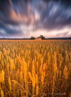 fields of gold (Germany) by Stefan Thaler on 500px