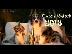 Dogs celebrate a happy evening in a romantic atmosphere Pet Dogs, Dog Cat, Happy Evening, Happy New Years Eve, Happy New Year Dog, Dog Birthday, Birthday Parties, Happy Birthday, Dog Owners