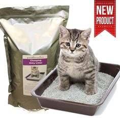 Home - Paradise Nutrients Pet Care, New Product, Health And Wellness, Paradise, Kitty, Pets, Animals, Little Kitty, Animales