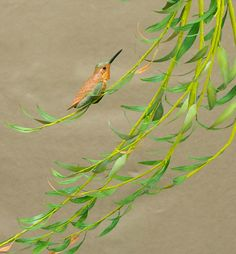 Rufous Hummingbird on Weeping Willow. Tupelo (bird), brass tubing and copper (branches and leaves), acrylic. Copyright Lori Corbett