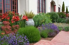 Bold splashes of color make this Mediterranean landscape pop. Landscape designed by writer Lynda Pozel.