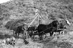 """Loading fresh cut hay on the Gillibrand ranch in Simi Valley. Jack Haigh (on ground) and E.C. Gillibrand (on wagon) along with the Gillibrand children (at far left) """"get their picture took"""" by a Los Angeles photographer with Garden City Photo Company in the 1890s. California History, Southern California, Simi Valley, Old Farm, Wild West, Where To Go, Vintage Photos, Ranch, City Photo"""