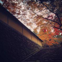 #彦根 からおはようございます(^O^)/ 久しぶりに焼酎を飲んで寝たら見事爆睡でした^_^ 今日は少しスロースターターです♪ 写真は西明寺の参道。繊細な紅葉♪ ということで 今日も張り切っていきましょう(^ー^)ノ #西明寺 #国宝 #朝ラン #紅葉 #おはよう