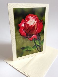 Ethel Curry Gallery located in the Haliburton Highlands of Ontario features artist information and art gallery portfolio's of fine Canadian artists. Canadian Artists, Artist Art, Pretty Flowers, Mothers, Art Gallery, Gift Ideas, Cards, Gifts, Beautiful Flowers