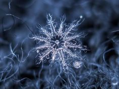 These Macro Photos Of Snowflakes Are Totally Breathtaking. With his stunning close-up photos of snow in Moscow, Russia, Alexey Kljatov proves nature is the world's most spectacular artist. Snowflake Photography, Macro Photography, Photography Ideas, Photo Macro, Snowflake Photos, Real Snowflakes, Simple Snowflake, Crystal Snowflakes, Ephemeral Art