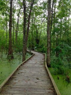 10 Swamp Trails Everyone In Louisiana Needs To Hike Before They Die