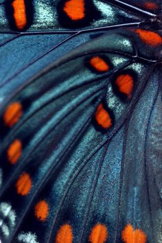 Butterfly wing closeup