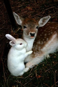 .OmGosh! This is Sooooo Cute!!! Never saw a bunny and a fawn pictured together, but they are both so gentle, I can see that they would have a great friendship. <3 Lovely pin. *^-^*:
