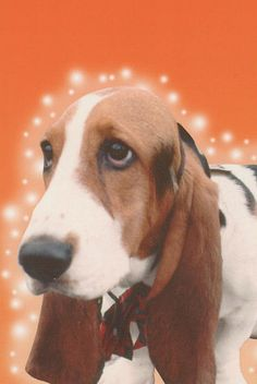 Basset Hound Santa Claus Merry Christmas by CafePretzel Merry Christmas, A Christmas Story, Christmas Dog, Christmas Ideas, Christmas Shopping, Dachshund, Basset Artesien Normand, Pet Dogs, Dog Cat