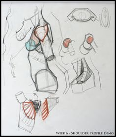 Analytical Figure Drawing SP08: March 2008