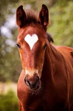 Foal with heart on forehead - love it