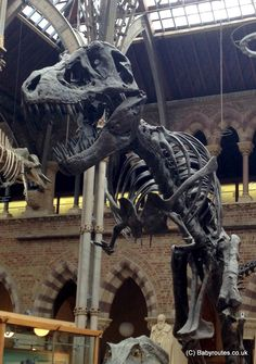 Family Days Out: Oxford University Museum of Natural History http://babyroutes.co.uk/family-days-oxford-university-museum-natural-history/?utm_content=bufferff4d9&utm_medium=social&utm_source=pinterest.com&utm_campaign=buffer Oxford University Museum of Natural History is a free-entry museum that is perfect for kids of all ages. From dinosaur skeletons and meteorites to living cockroaches and bees, this museum will have you coming back time and again and inspire your little ones to learn…