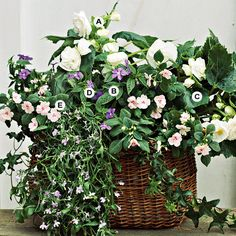 Don't be intimidated if you don't have full sun. A mix of colorful annuals, such as the ones shown here, will bloom all summer long -- even in full shade. A. White Begonia B. x tuberhybrida--2 B. Browallia speciosa--2 C. Impatiens 'Super Elfin Salmon Blush'--2 D. Lobelia erinus 'Regatta Lilac'--1 E. Hedera helix--1