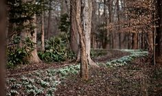 Montrose in Hillsborough NC--a fab garden to visit