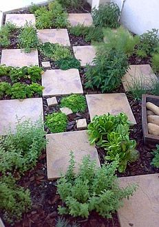Herb garden planted checkerboard paving stones Xeriscaping idea