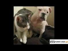 Super faza intre un caine si o pisica!! | FUNNY VIDEO