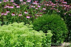 Ogród do kwadratu - strona 448 - Forum ogrodnicze - Ogrodowisko