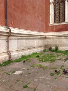 Terzo paesaggio, Venezia