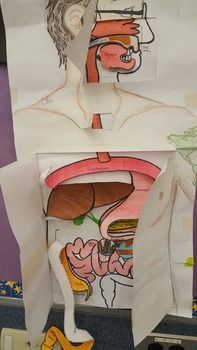 Biology Digestive system - Overview Layered Poster