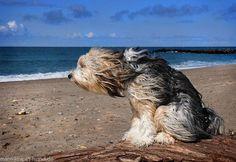 doggie at beach