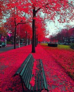 Autumn in Amsterdam - The Netherlands