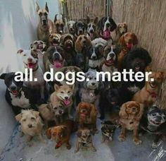 ALL Dogs Matter! #adoptdontshop