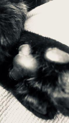 Matilda - Black cat