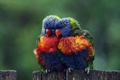 不思議な模様から派手な色まで、色彩豊かで見た目が際立つ動物たちを選りすぐって紹介します。