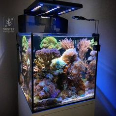 Historically saltwater aquarium owners have shied away from reefs. No one could understand why when these coral reefs were put into an aquarium the reef had a Saltwater Aquarium Setup, Coral Reef Aquarium, Saltwater Fish Tanks, Aquarium Design, Marine Aquarium, Aquarium Fish Tank, Fish Aquariums, Marine Fish Tanks, Marine Tank