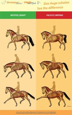 See the difference!  #horses #dressage  #riding www.no-rollkur.com www.dressur-studien.de