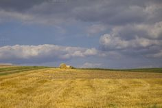 Hay in the field by Patricia Hofmeester on Creative Market