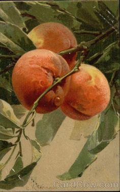 Three Peaches on the Branch C. Klein Fruit