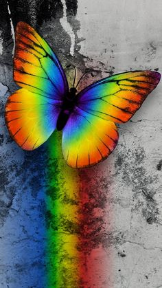 Opal color, color of life, rainbow background, butterfly background, butter Rainbow Wallpaper, Butterfly Wallpaper, Cute Wallpaper Backgrounds, Pretty Wallpapers, Animal Wallpaper, Nature Wallpaper, Sports Wallpapers, Rainbow Butterfly, Rainbow Art