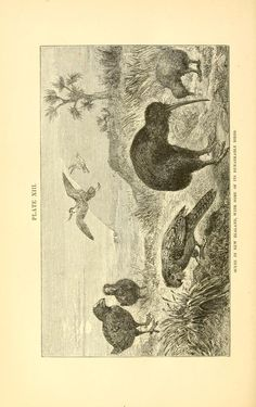 From #AlfredRusselWallace's v 1 - The geographical distribution of animals: with a study of the relations of living and extinct faunas as elucidating the past changes of the earth's surface