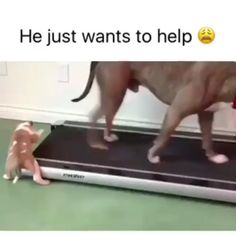 """Páči sa mi to: 9,590, komentáre: 227 – 🔥Follow to burn fat better (@howtoburncalories) na Instagrame: """"My dog needs this and I need this dog 😍 @bestvines"""""""