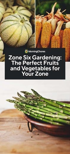 Zone Six Gardening The Perfect Fruits And Vegetables For Your Zone Although Zone 6 Can Be Very Cold The Weather Warms Up Quickly And Stays Warm Long Enough See Our Tips And Tricks For Zone Six Gardening Success Perennial Vegetables, Organic Vegetables, Growing Vegetables, Fruits And Vegetables, Growing Herbs, Organic Fruit, Growing Tomatoes, Veggies, Organic Gardening Tips