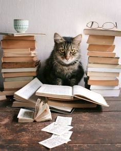 Do you have a cat-themed planner? Are you going to organize your life on Planner Day? Do you have a cat-themed planner? Are you going to organize your life on Planner Day? I Love Cats, Cool Cats, Cat Reading, Cat Sitting, Beautiful Cats, Cat Breeds, Cat Memes, Cats And Kittens, Cats Bus