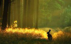 Misty morning hare