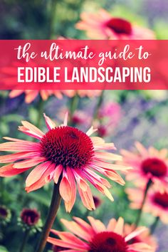 The Ultimate Guide to Edible Landscaping (Must Read Edible Landscaping Ideas)